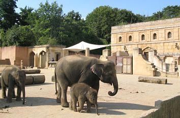 quermania zoo hannover elefanten dschungelpalast niedersachsen freizeitgestaltung. Black Bedroom Furniture Sets. Home Design Ideas