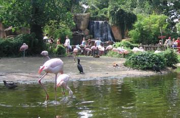 quermania themenwelten zoo hannover sambesi in den gew ssern afrikas erlebniszoo. Black Bedroom Furniture Sets. Home Design Ideas