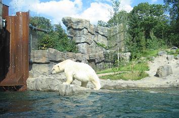 quermania themenwelten zoo hannover eisb ren in der yukon bay erlebniszoo niedersachsen. Black Bedroom Furniture Sets. Home Design Ideas