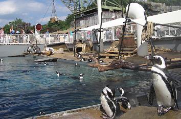 quermania themenwelten zoo hannover pinguine auf dem schiff yukon bay erlebniszoo. Black Bedroom Furniture Sets. Home Design Ideas